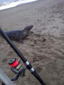 Seal at Mogg's Eye pus fishing tackle!